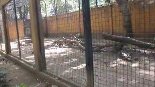 Year of the Monkey - Manila Zoo Bonding with Family Fact, etc