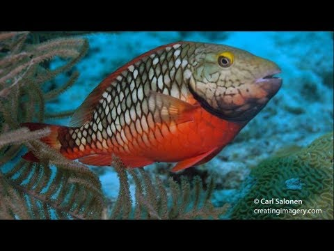 Help Seacology Save Parrotfish And Coral Reefs In Colombia
