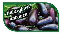 Auberginen erfolgreich anbauen 🍆 Melanzani im Gewächshaus oder besser im Freiland pflanzen?