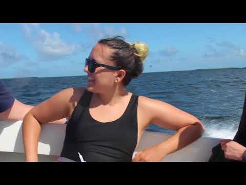 Boston University Marine Program Belize November 2017