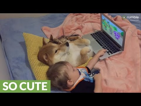 Dog, cat & baby watch cartoons together