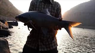 Fishing in Srisailam for  The black Monter fish , monster story ,Rohu fish, como pescar