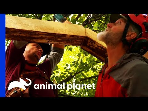 Building A Treetop Sauna For Two Alaskan Adventurers | Treehouse Masters