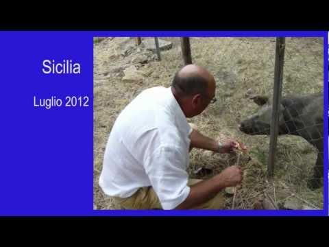 L'uomo che parla con gli animali – 2012