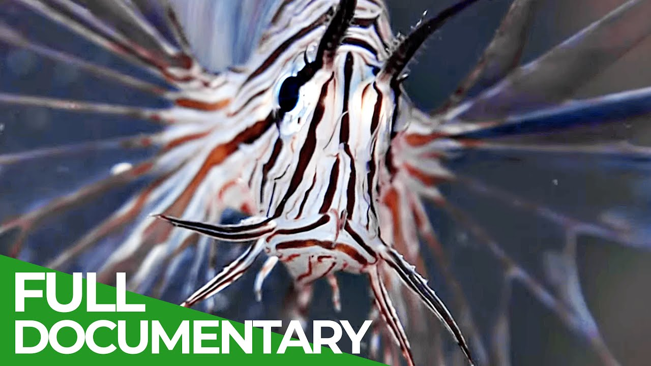Miracle Venom | Blue Realm | Free Documentary Nature