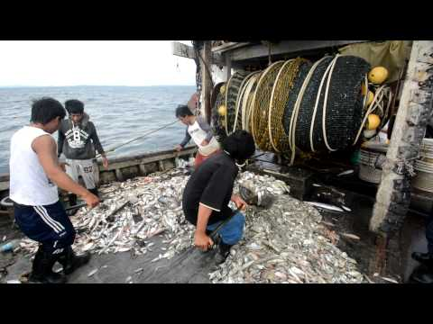 WWF-Malaysia Marine Programme: Deep Dive to Protect Our Magn