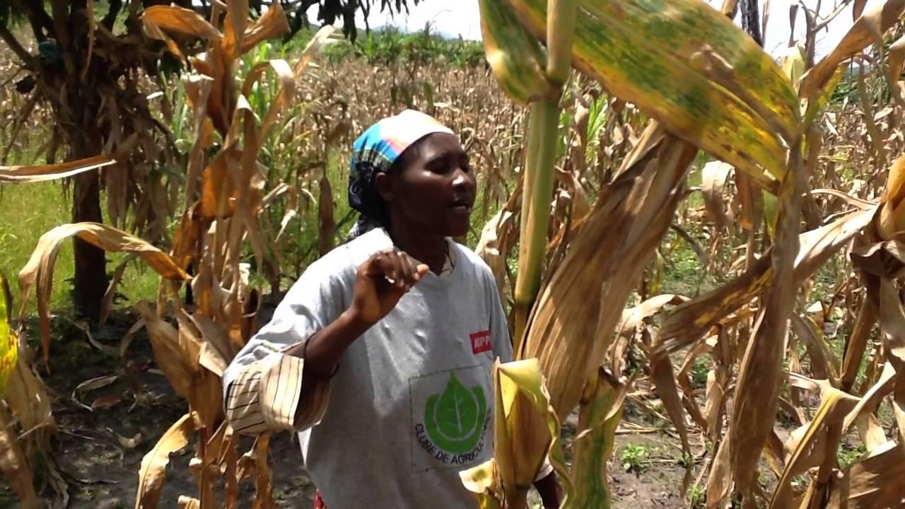 Women's Farmers' Club Kwanza Sul, part 2