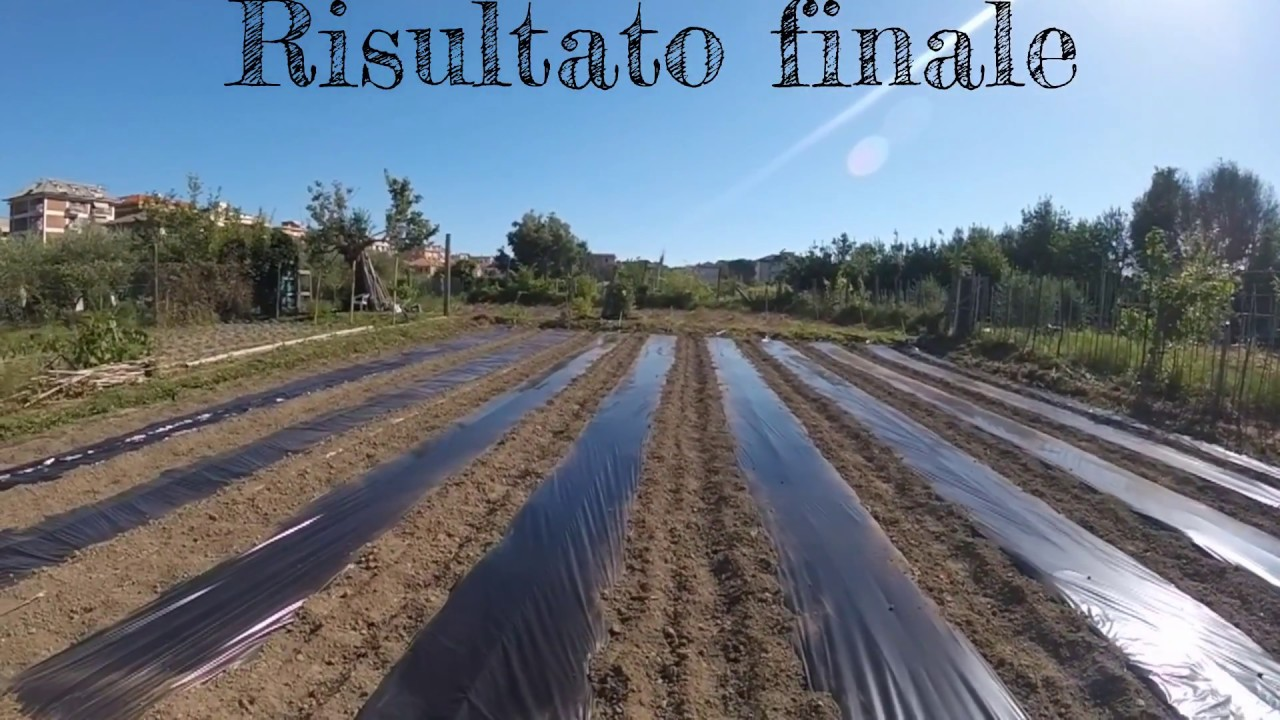 Zucchino Guida Alla Pacciamatura Irrigazione Concimazione Capralog 6