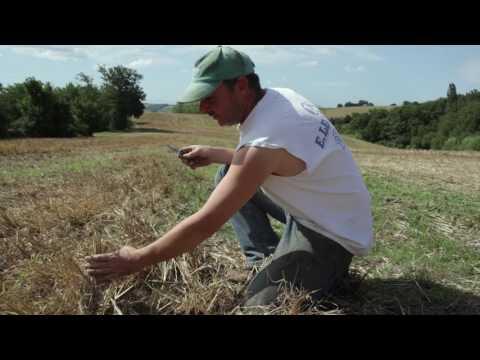 GAEC de La Baronnesse: agriculture de conservation