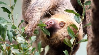 International Sloth Day at Fota Wildlife Park