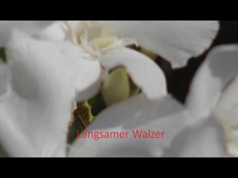 tanzmusik---secret-garden---langsamer-walzer