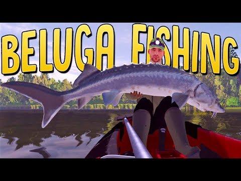 Catching The Largest Freshwater Fish In A Kayak - Beluga Sturgeon - The Fisherman Fishing Planet