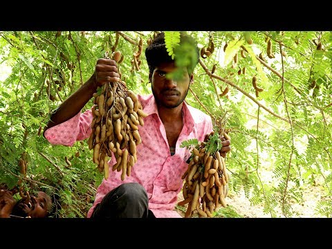 Farm fresh GREEN TAMARIND cut and eat it with salt and chilli powder in my village