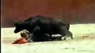 أسباب منع النساء من مصارعة الثيران