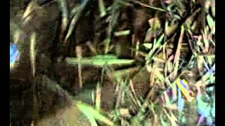 Alwarthoppu Temple Festival 2009 - Pannaiyar Song (Audio)