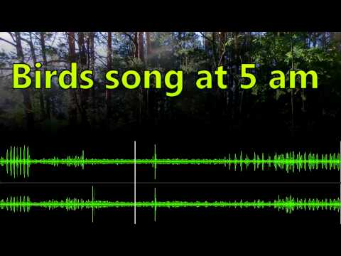 Relaxing singing birds morning song at 5 am