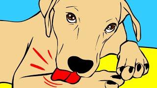 Dlaczego psy liżą łapki oraz 26 innych psich pytań