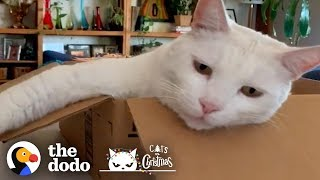 Cats Only Want One Thing For Christmas | The Dodo