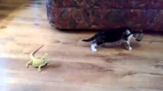 Video Kucing Terkejut Beruk download MP3, 3GP, MP4, WEBM, AVI, FLV Juli 2018