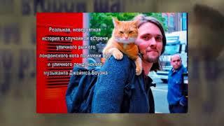 "Буктрейлер по книге Дж. Боуэна ""уличный кот по имени Боб"""
