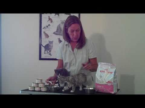 Royal Canin BabyCat Kitten Food