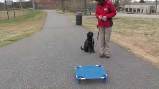 Dog Training, Raffi, Day 6: Off-leash Recall Dog Park