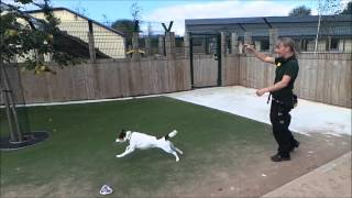 Dogs Trust Manchester - Raffie