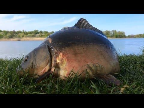 Видео ловля карпа в июле на пруду