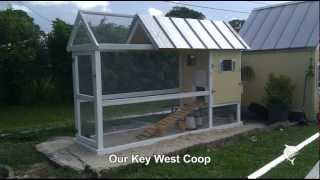 How To Build A Key West Chicken Coop