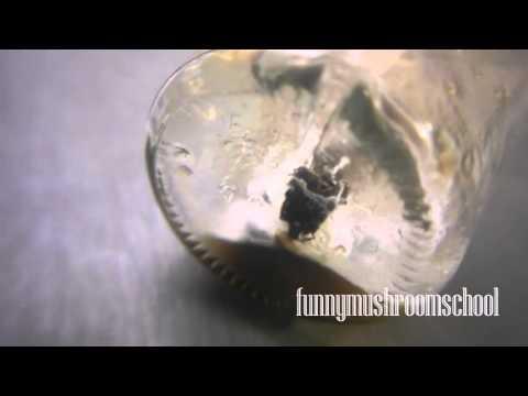 споры мицелий гриба диагноз