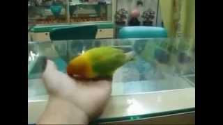 Попугай, который видел секс .flv
