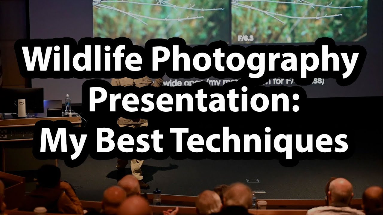 Wildlife Photography Presentation - Best Techniques