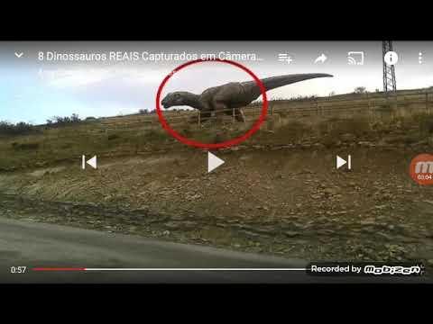 8 Dinossauros Reais Youtube
