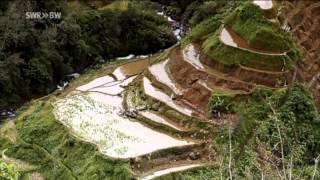 Philippinen   Reis für die Zukunft Reportage über die Philippinen