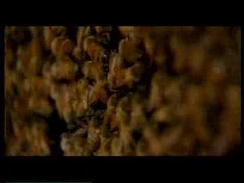Girl Stars - Anita the Beekeeper | UNICEF