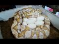 Magic Snake Eggs? Wait for It!