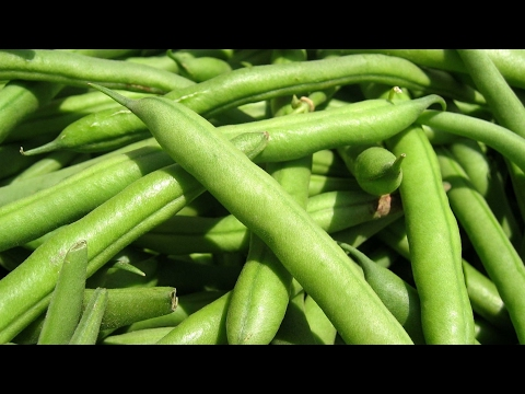 बीन्स खाने के फायदे , benefits of french beans