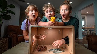 Can you feel it? | What's in the box challenge 📦😱