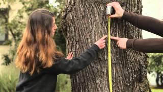 How to Measure Tŗee Diameter