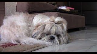 Как оставлять собаку дома | Разлука с хозяином