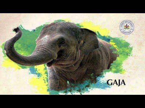 GAJA - A Short documentary on Elephants - By Forest Department, Govt. of Karnataka