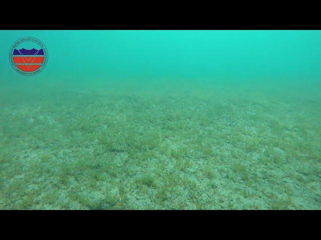 <span class='as_h2'><a href='https://webtv.eklogika.gr/ypovrychio-video-toy-ergastirioy-thalassias-geologias-kai-fysikis-okeanografias' target='_blank' title='Υποβρύχιο video του Εργαστηρίου Θαλάσσιας Γεωλογίας και Φυσικής Ωκεανογραφίας'>Υποβρύχιο video του Εργαστηρίου Θαλάσσιας Γεωλογίας και Φυσικής Ωκεανογραφίας</a></span>
