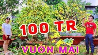 BUI VLOGS | Đi Thăm Vườn Mai 100 triệu của chú Út - Mai nở hoa 100 cánh