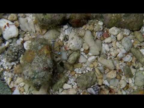 fiji small sea creatures