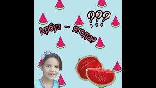 Почему арбуз- ягода?  Вся правда  Следопыт и Почемучка