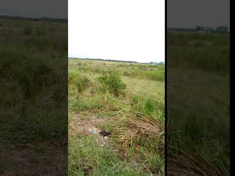 PROPOSED VEGETABLE FARM 2 -ACHILA UBAY BOHOL PHILIPPINES