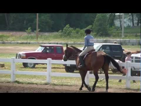 Open Walk Trot: CPSC Show at Linn County Fairgrounds 2012