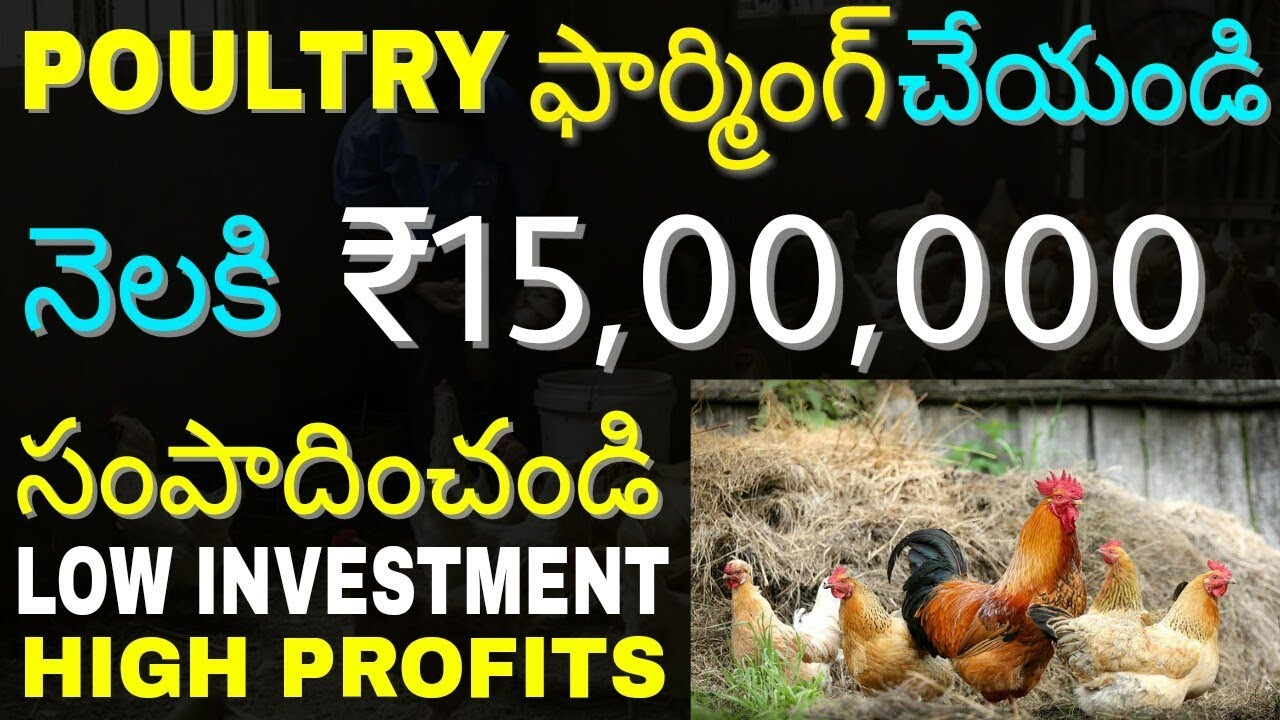 How To Start Poultry Farming Business and Earn Money | Chicken Farming  Business | in telugu |