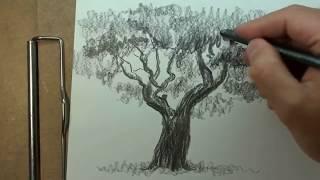 рисуем деревья.avi