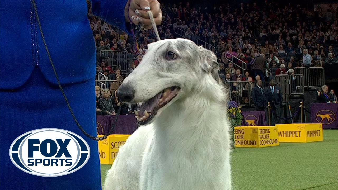 Watch Lucy the Borzoi win the 2018 Westminster Kennel Club Dog Show Hound Group | FOX SPORTS